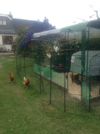 Great fencing for keeping chickens out of main garden when needed !