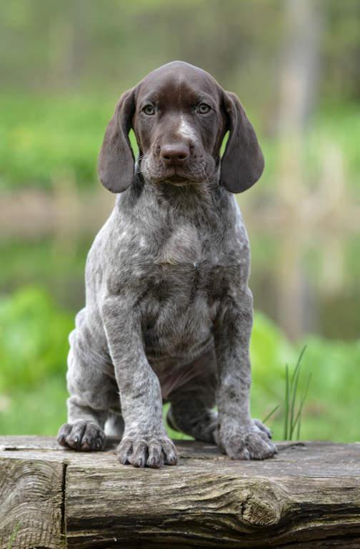 Respectful Dog Training