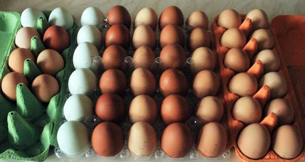 White leghorn and ex battery hens eggs