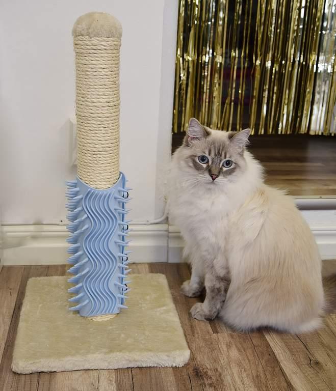 Igloo Beauty Pflegebaum Für Katzen Groß Blau
