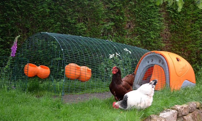 Eglu Classic Chicken Coop in a garden with chickens