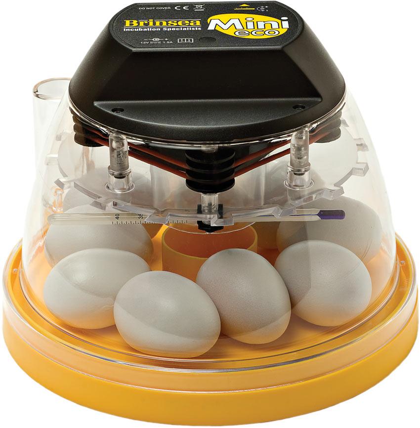 Ein Brinsea Mini Eco Inkubator