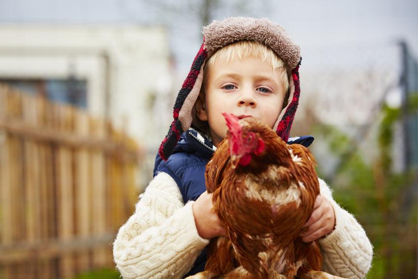Ein Junge hält seine gezähmte Henne, die es offensichtlich genießt, hochgehoben zu werden
