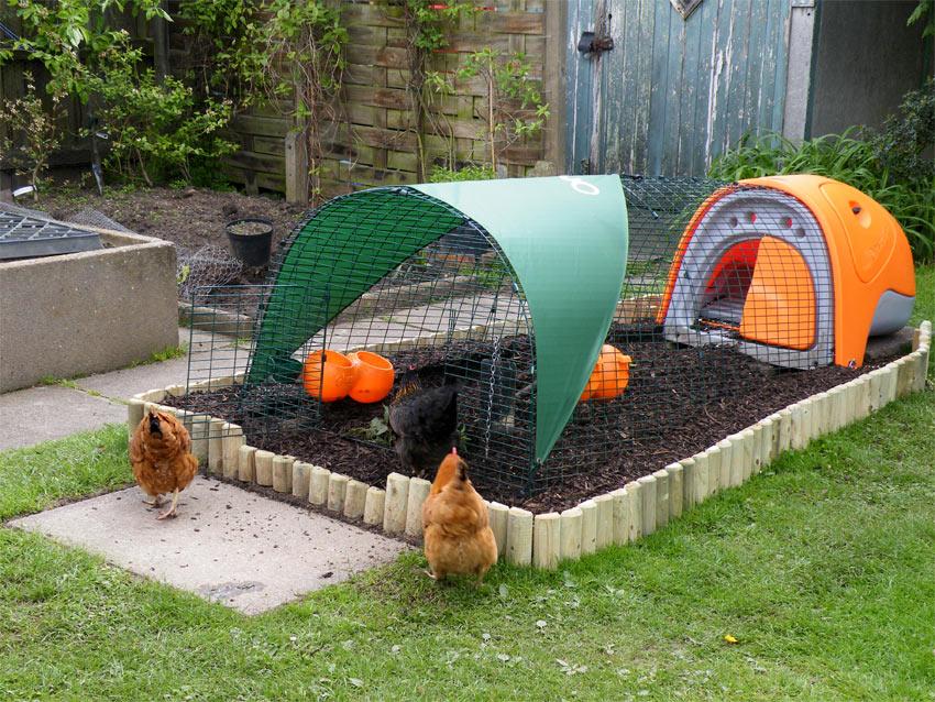 Unseren Hühnern wir ihr neues orangenes Eglu Classic Hühnerstall vorgestellt