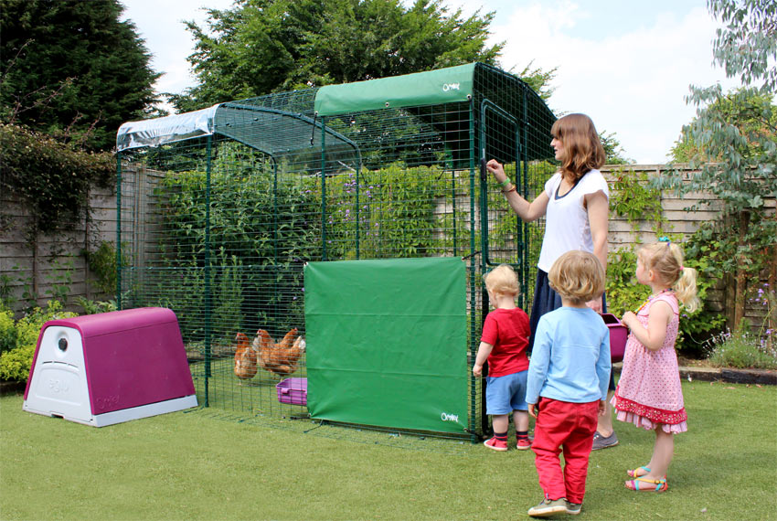 Ein paar Hühner genießen ihr Walk In Run Hühnergehege mit einem Eglu Go und ein paar Kindern