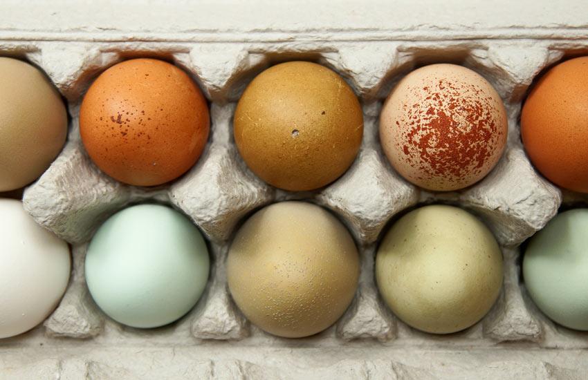 Zehn wunderschöne Hühnereier, die alle von einer anderen Henne gelegt wurden