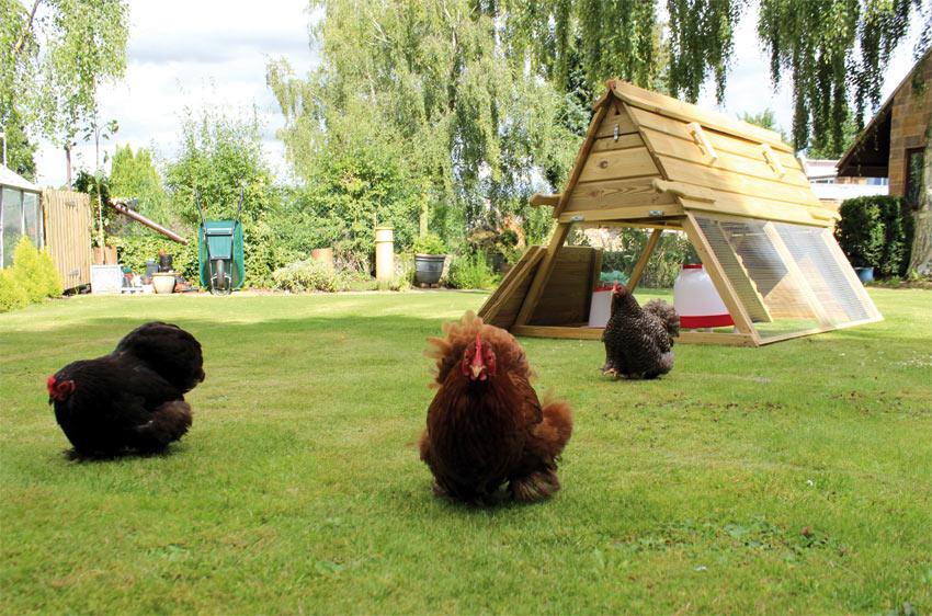 Der Boughton Hühnerstall wird von ein paar Bantams genutzt