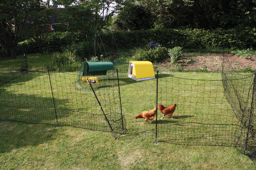 Der Omlet Hühnerzaun hält die Hühner vom Gemüsebeet fern