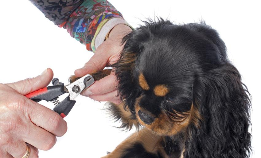Ein Hund wird gut gepflegt und bekommt seine Nägel geschnitten