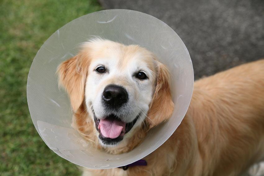 So Lassen Sie Ihren Hund Kastrieren Sterilisieren Allgemeines