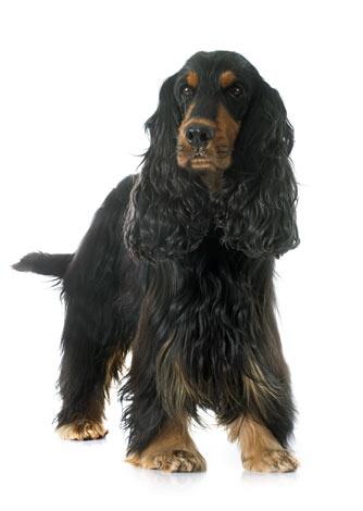 welcher hundefelltyp eignet sich am besten f r mich den richtigen hund w hlen hunde. Black Bedroom Furniture Sets. Home Design Ideas