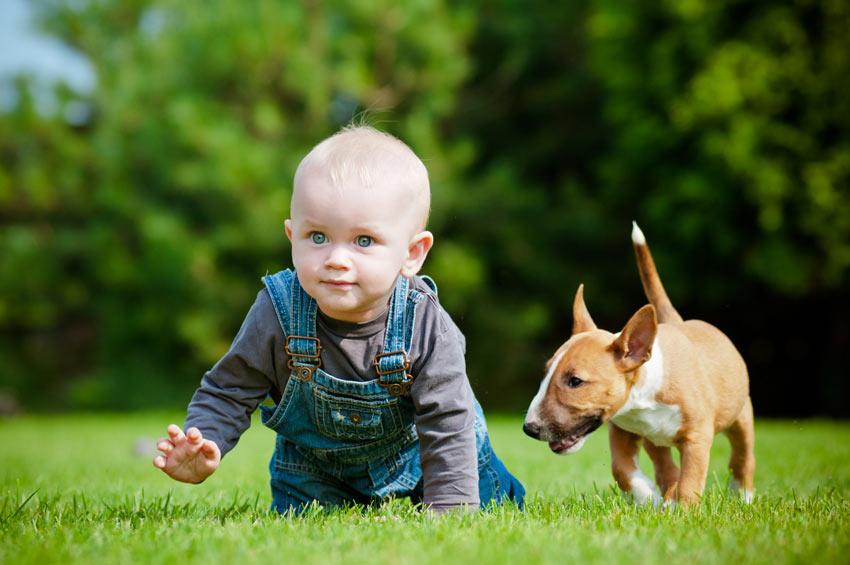 Ein Baby und ein Bullterrier beim Spielen
