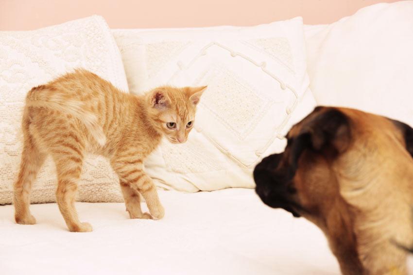 Eine Katze vermeidet bewusst einen fremden Hund