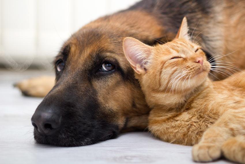 Ein liegender Hund mit seinem rothaarigen Freund