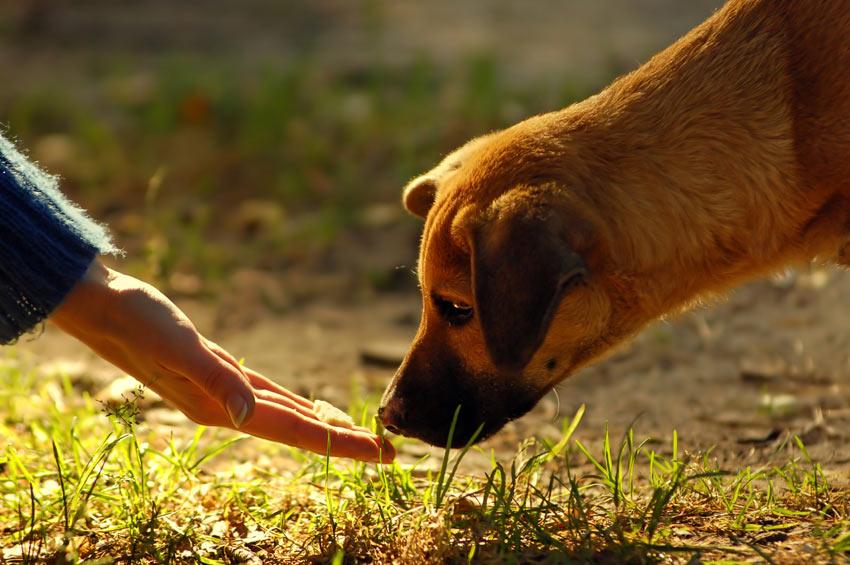 Ein Hund schnüffelt an einem Leckerli