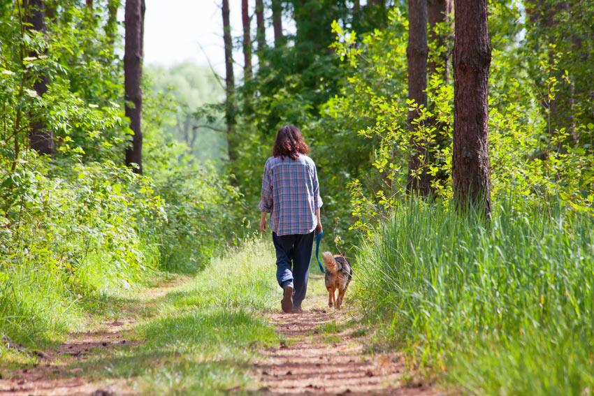 Ein Hund geht im Wald spazieren