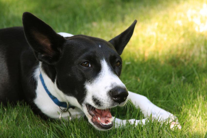 Warum Kauen Hunde An Ihren Pfoten Faqs Hunde Handbuch Omlet