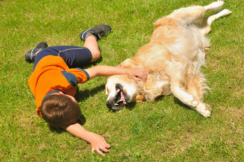 Ein Junge, der mit seinem Golden Retriever im Gras herum rollt.