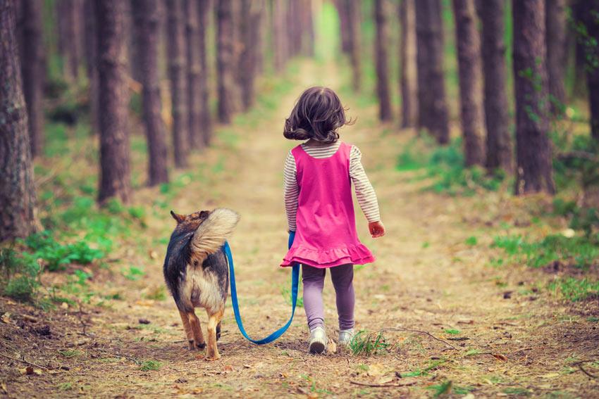 Ein junges Mädchen führt ihren gehorsamen Hund auf einem Waldspaziergang