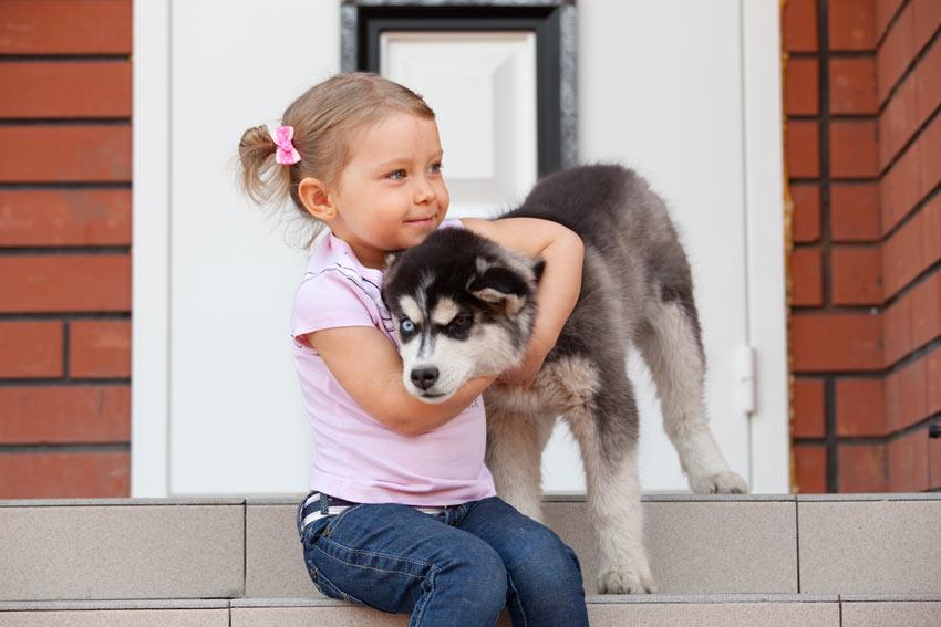 Ein kleines Mädchen mit einem Siberian Husky Welpen