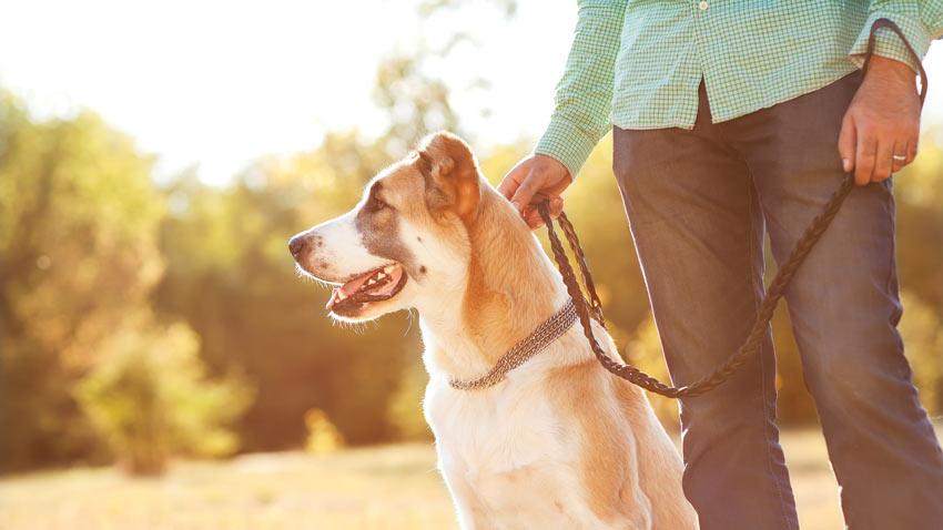 Ein gehorsamer Hund sitzt neben seinem Besitzer