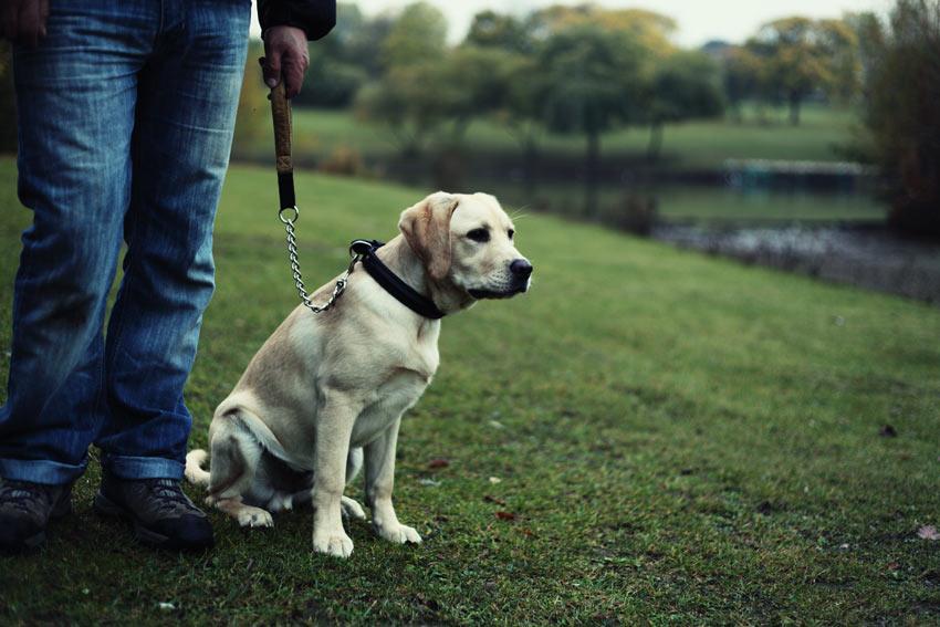 Beginnen Sie mit Ihrem Hund an der Leine