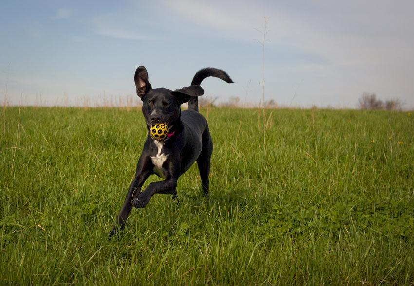 Ihren Hund frei zu lassen, gibt ihm die Möglichkeit, mehr Auslauf zu haben