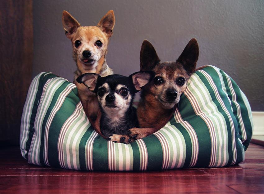 Drei Hunde kuscheln zusammen in einem schönen warmen Bett