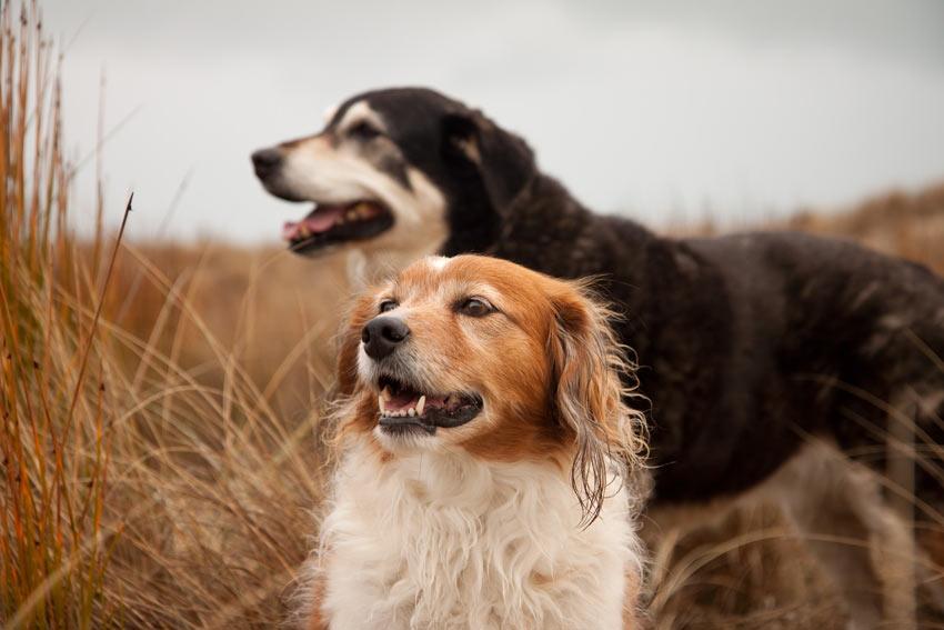 Ein Hundepärchen genießt die Gemeinschaft mit dem jeweils anderen