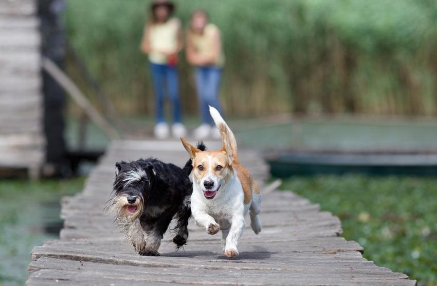 Zwei Hunde spielen miteinander, beaufsichtigt von ihren Besitzern