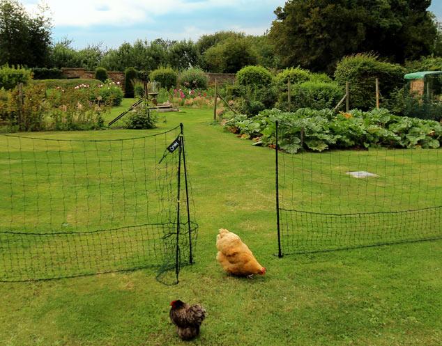 Zwei wunderschöne Bantams durchsuchen den Garten nach Würmern und Raupen