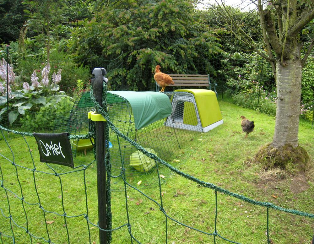 Die Umzäunung von Omlet erlaubt Ihren Hennen, etwas mehr von Ihrem Garten zu entdecken, hält sie aber vom Blumenbeet fern