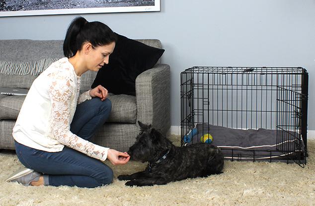 Hundeboxen machen das Training nicht nur leichter, sie machen den Transport Ihres Hundes im Auto zu einer sicheren Erfahrung
