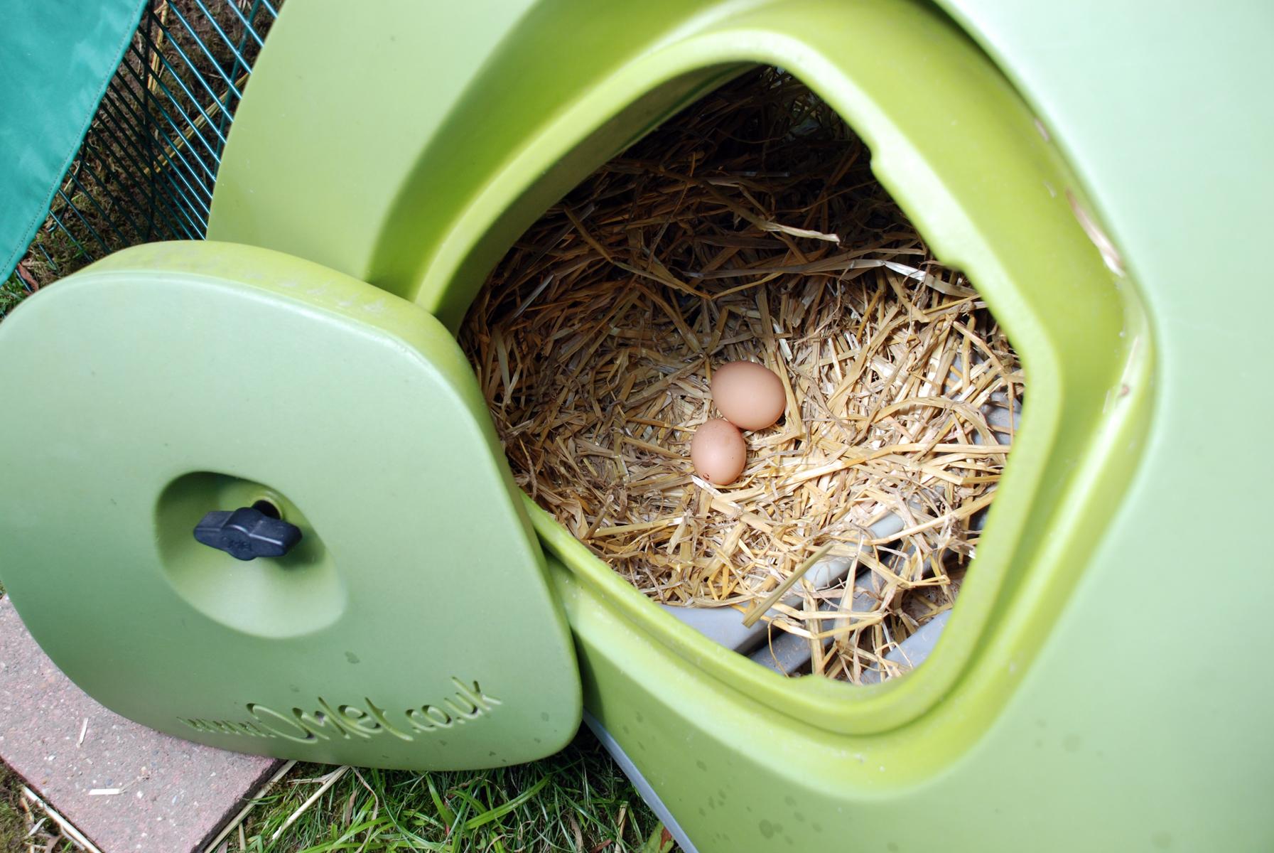Fiona Watkins liebt es am Morgen ihre frischen Eier aus dem Eglu zu sammeln