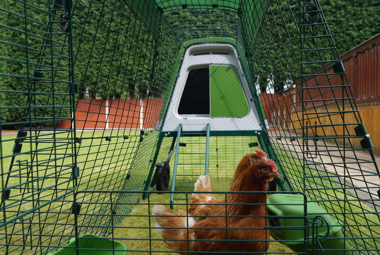 Stephanie Crofts Gingernut Rangers Daphne und Velma genießen ihr neues Eglu Go UP mit Auslauf