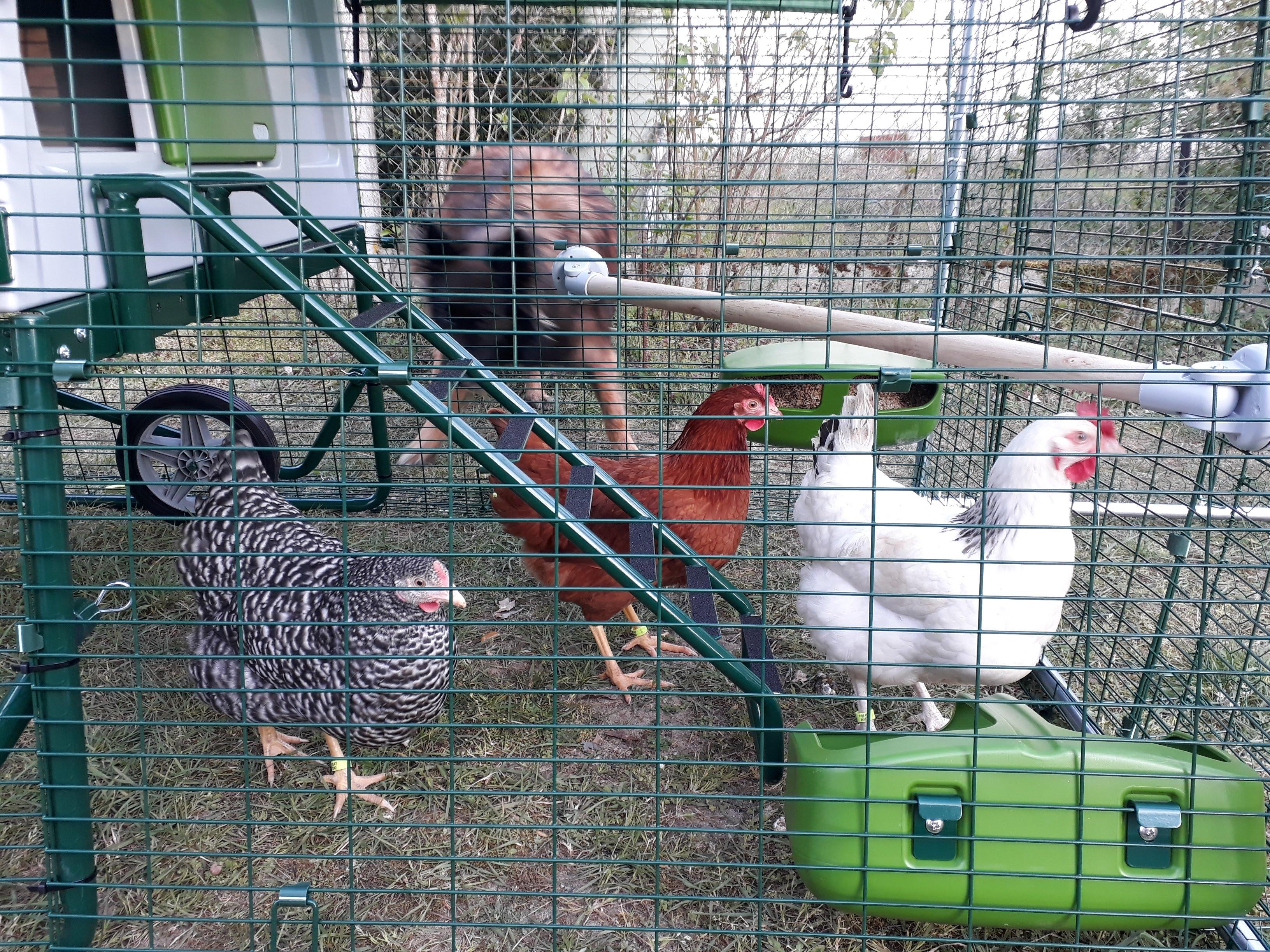 tiroler hühnerschaukel