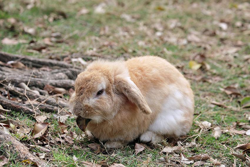 wie graben kaninchen ihren bau ber kaninchen kaninchenhaltung handbuch omlet de. Black Bedroom Furniture Sets. Home Design Ideas