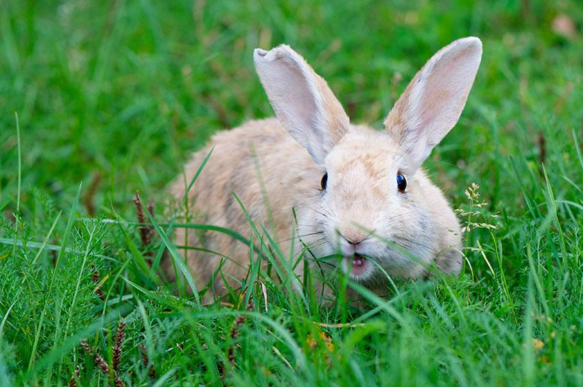 Wie Sie Ihren Garten Sicher Für Kaninchen Machen Kaninchen Faqs